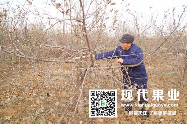 桃树冬季修剪时间